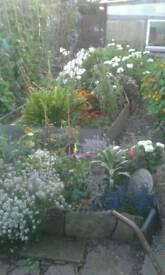 Stephens garden service's