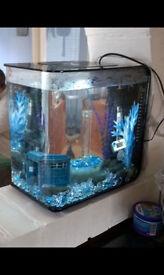 Fish tank Biorb 15lt and all accessories