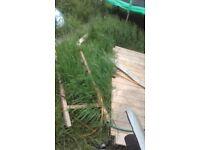 Jacks gutter n garden property services