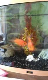 Juwel fish tank 180 ltr Vision with fish etc
