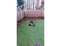 Garden tidy ups by Amaryllis