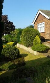 'CleanBeez' Affordable, Reliable, Home cleaning service, with proven track record, in LOWESTOFT