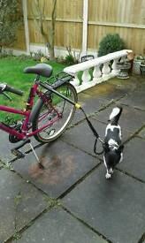 Bike dog running leash