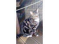 Missing cat Weston under Wetherley