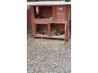 Free to good home. Female Rabbit with hutch