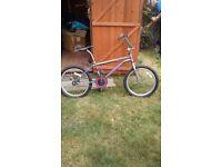 BMX Hammerhead