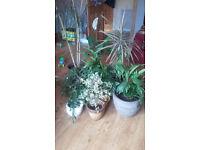 Mature Plant Collection