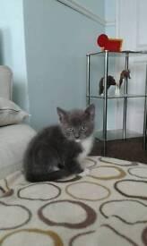 4 beautiful male kittens.