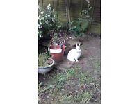 Rabbit hutch cover needed.