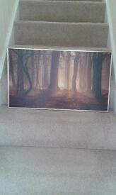 Gold and brown canvas of forest
