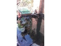 Glass pond filter for sale