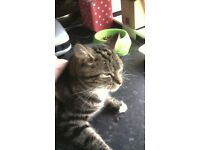 MISSING CAT TYRELLA/CLANMAGHERY RD