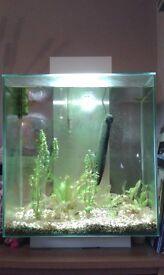 Tropical Aquarium - Perfect for beginners