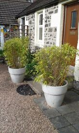 Ceramic 60cm Giant Planters. All Weather, Frost Free. Can be sold individually.