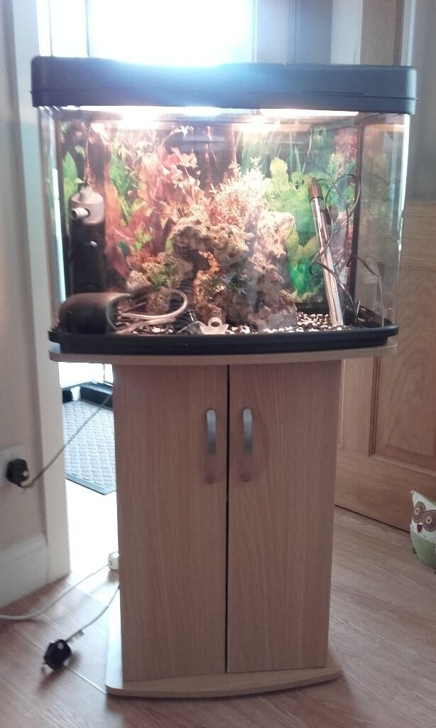 Fish tank & stand full tropical set up