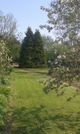 3 bed labourers cottage with half acre of stunning mature garden