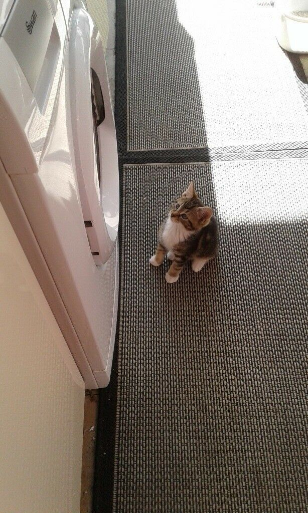 ce4726b8de9c 9 weeks old kitten looking for a good home. Derby ...