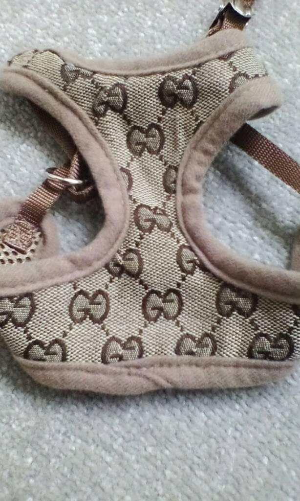 Gucci c.o.p.y. harness