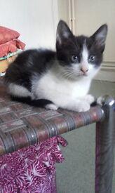 4 lovely tabby kittens for sale going cheap
