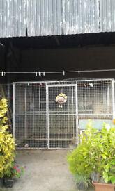 dog run,dog pen,dog enclosure
