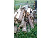 large amount of seasoning wood