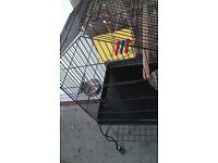 EXCELLENT VERY CLEAN Bird/Parrot Cage LIKE NEW & Delivery is possible Excluded Charge