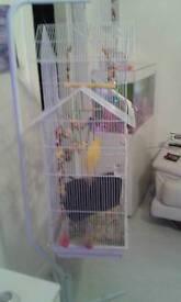 Liberta jintu large bird cage