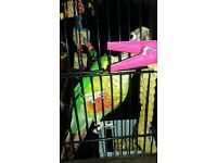 beautiful conure parrot for sale !!!