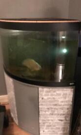 Fluval Juwel 190 corner fish tank
