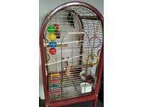 Red crowned conure parrot with cage, toys and food
