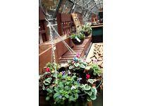 Seasonal winter hanging baskets