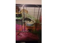 2 Lovely Little Gerbils Looking For a New Home