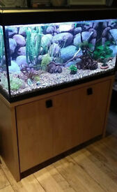 Fluval Roma 200 Fish tank + fish, plants and accessories