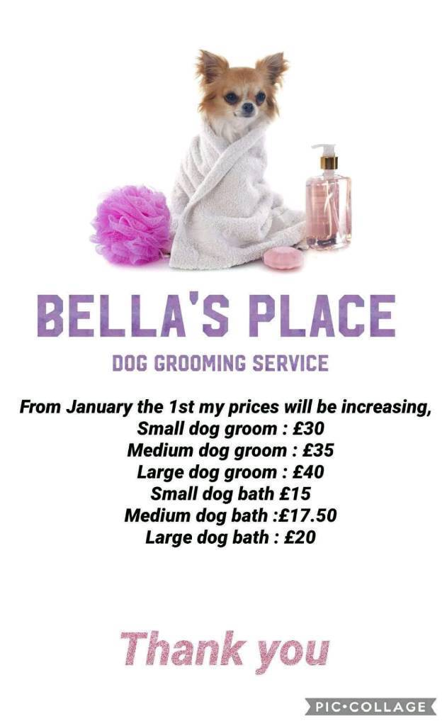 Dog Grooming Service In Hull In Hull East Yorkshire Gumtree