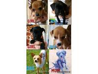 Mixed breed puppies