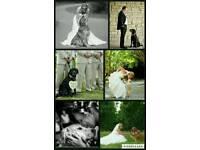 Barkin Bridals - Dog Wedding Chaperone