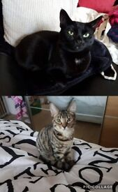 2 adorable cats for rehoming