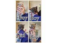 Lovely kittens for sale ( SOLD )