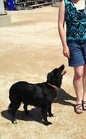 WANTED INFORMATION: SHADOW, 10 month old Spayed Female Dog