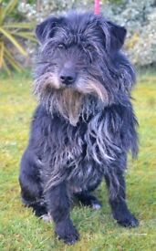 ZACK- Needing Forever Home- Paws and People