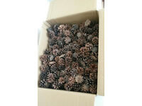 Pine Cone Box Mixed Sizes Natural Dried Craft Christmas Floral Wreath Decoration Hanging
