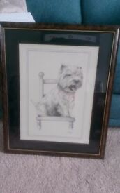 West highland terrier picture