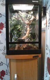 Terrarium reptile one