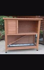 French lop eared rabbits and 2storey hutch