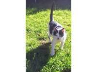 Cat missing Newtownards