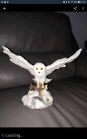White Snowy Flying Owl.