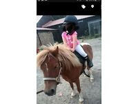 for SHARE ridden 7yr old shetland pony