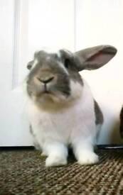 Bugs, male rabbit
