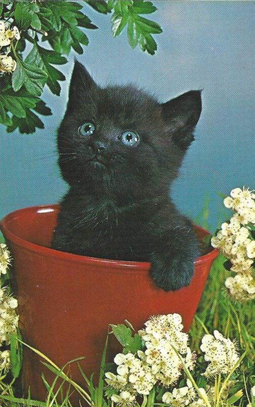 CATS Older Chrome Postcard - Animals - CATS