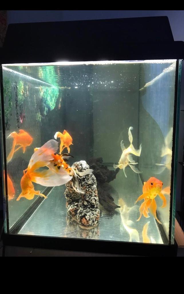 110L Aquarium Fish Tank lights, Pump Filter and Accesories